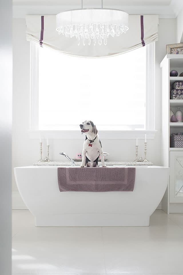 Dog sitting white bathtub.
