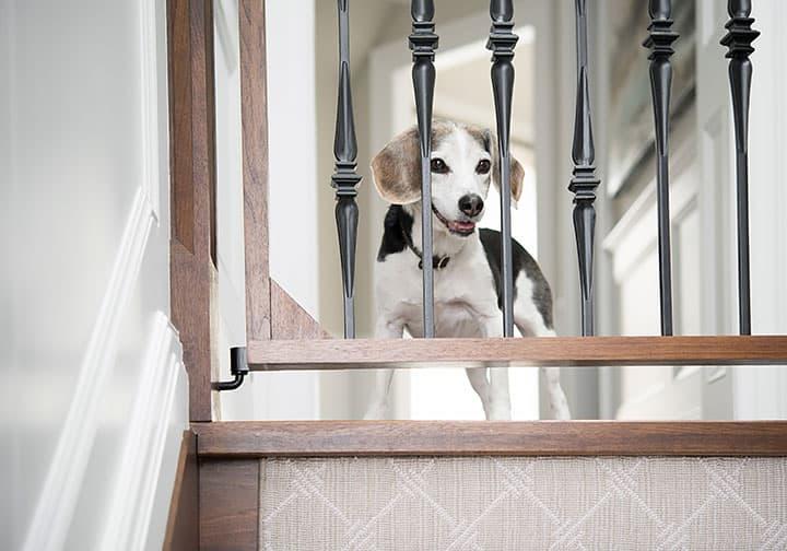 Dog-friendly gate